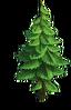 Tree-Spruce
