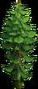 Tree-Rare fir-tree