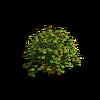 Shrub-Large bush 1