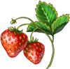 Wild Strawberry Seeds.png