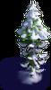 Tree-Snowy large fir-tree