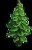 Tree-Small fir-tree