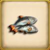 Fish (Item)