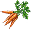 Carrot Seeds.png