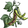 Bean Seeds.png