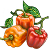 Sweet Pepper Seeds.png