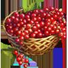 Redcurrant Crops.png