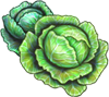 Cabbage Seeds.png