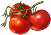 Tomato Seeds.png