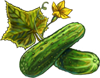 Cucumber Seeds.png