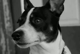 Robert's dog.png