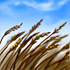 Fertile Winds-icon.png