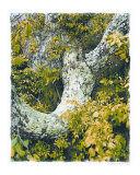 Kathryn-m-smith-celidon-tree.jpg