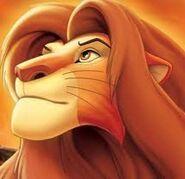 Simba; erwachsecxvbbsdfbn