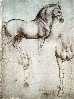 Studium konia.jpg