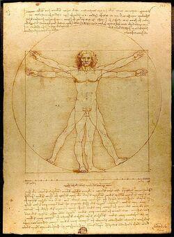 Studium proporcji ludzkiego ciała.jpg