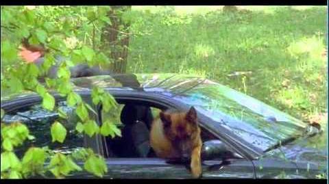 Rex chien flic - Présentation générale de la série