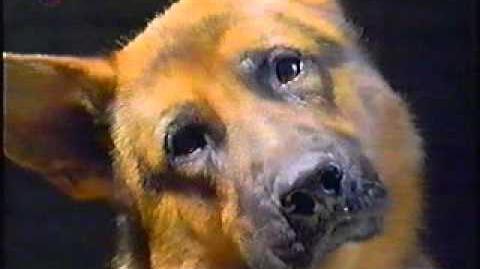 Kommissar Rex ist wieder da !Reklamefilm von Sat 1 1997