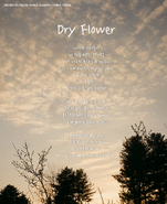 "VAV Always ""Dry Flower"" lyrics image"
