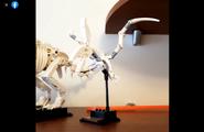 Dinozaur3