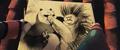 Portrait of Porcupine kicking --Po--