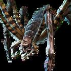 Black Tiger Spider.png