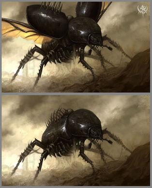 Escarabajos Funerarios.jpg