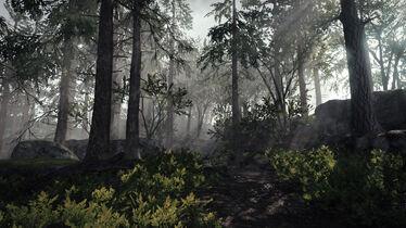 Bosque Vermintide 2.jpg