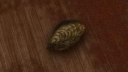 Chameleon 428