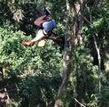 1-4-18 Canopy in Costa Rica 001