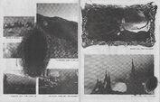 Chromatica Trifold LP fanzine 008