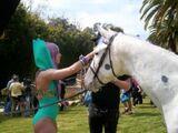 Paparazzi (Horse Scene 3)