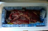 Franc Fernandez - Meat Dress 3