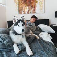 Jaxx on bed