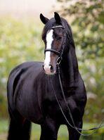 89e442a3e05609e8af0e0850644a26a5--most-beautiful-horses-pretty-horses