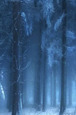Mysterious-forest-in-winter.jpg