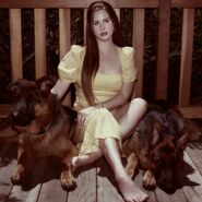 Lana Del Rey Blue Banisters Cover Untagged
