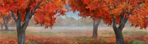 Red Forest Image .png
