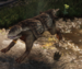 Shell hound.png