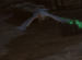 Necromancers crow.png