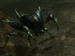 Marsh beetle.png