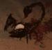 Blood scorpion.png