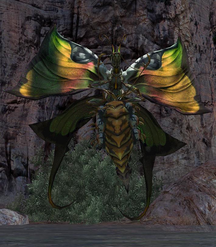 Greater Papillon