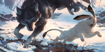 A Gray Wolf chasing a Snow Hare.