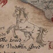 Light Vindoran Horse