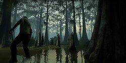 C3m2 swamp.jpg