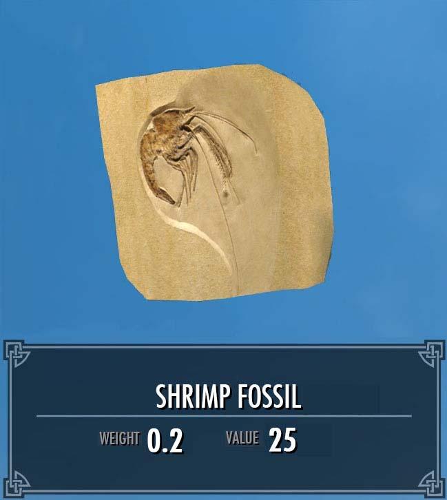 Shrimp Fossil