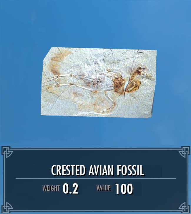 Crested Avian Fossil