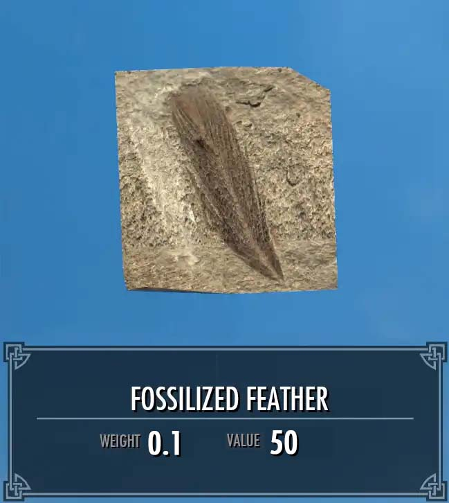 Fossilized Feather