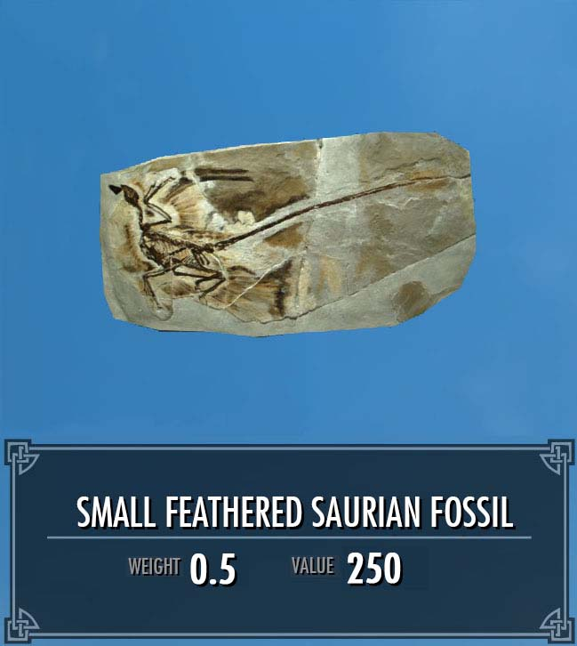 Small Feathered Saurian Fossil